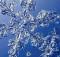 crystals_700x350